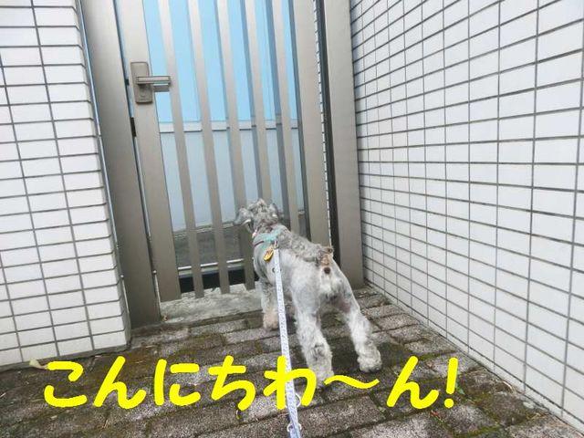 CIMG0298.jpg