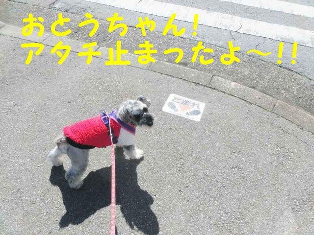 CIMG4201.jpg