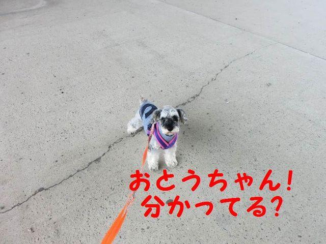 CIMG4609.jpg