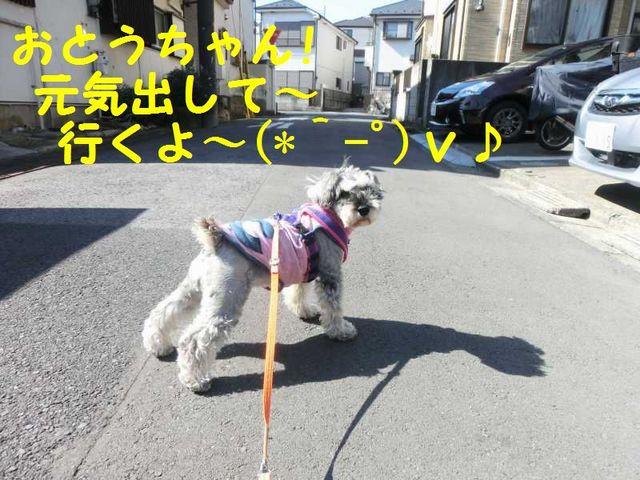 CIMG4689.jpg