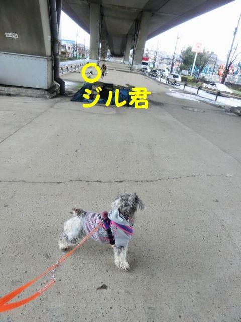 CIMG4779(ジル君).jpg