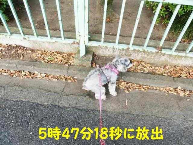 CIMG9384.jpg