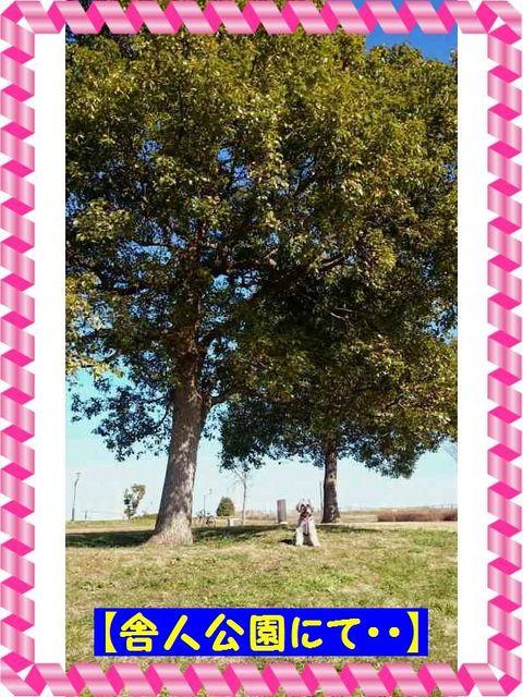 舎人公園(2).jpg