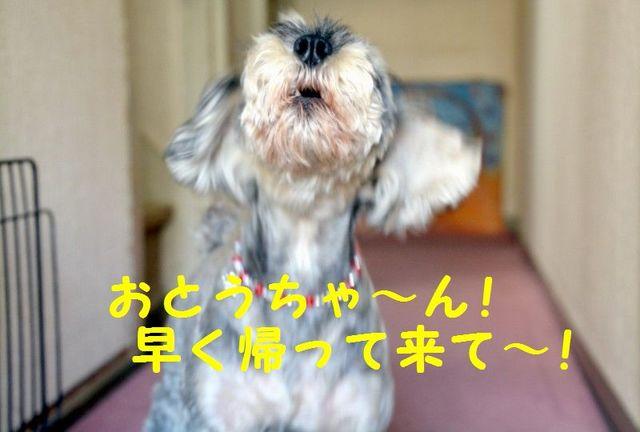 JPG_3734.jpg