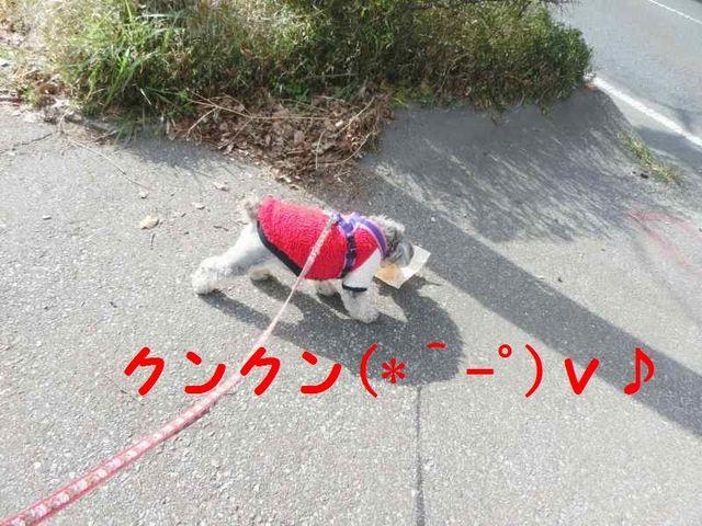 JPG_4279.jpg
