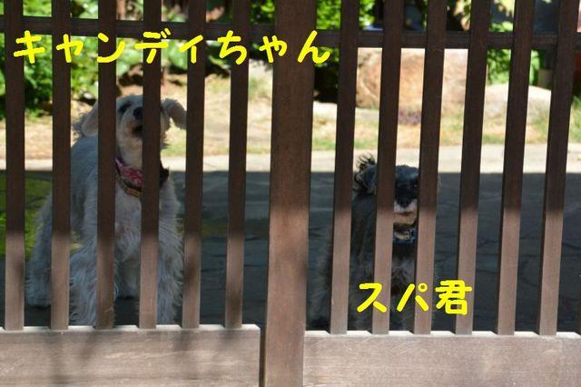 JPG_5803.jpg