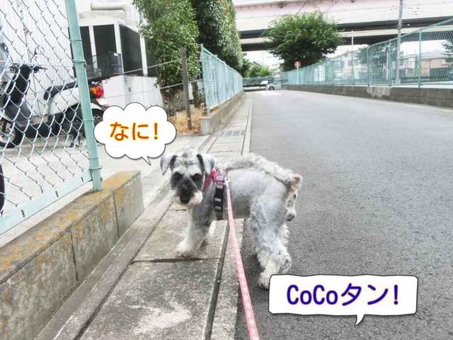 CIMG0493.jpg