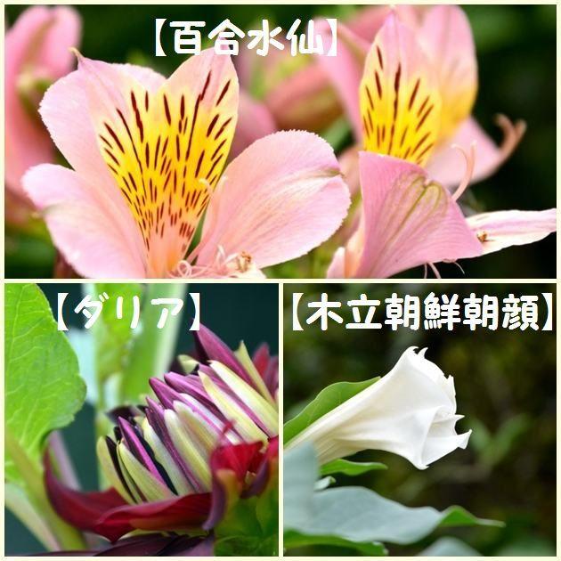 JPG_7199.jpg