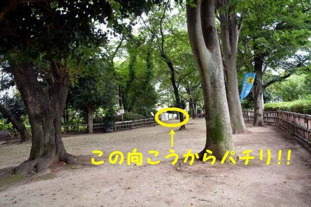 JPG_7229.jpg